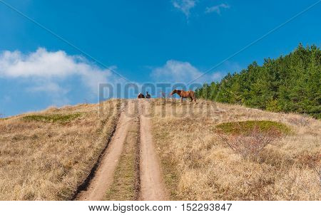 Autumnal landscape with earth road and tatar horses on a mountain pasture Demerdzhi Crimean peninsula