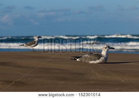 Seagulls on a beach in the summer