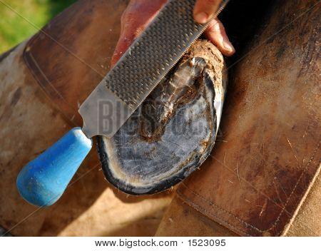 Horse Shoe And Rape