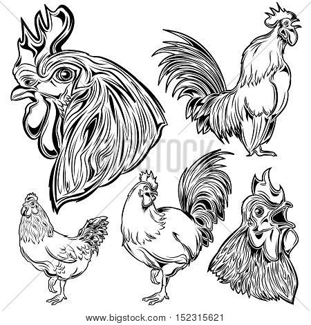 Monochrome hand drawn set of cock and his head singing and growth of bird isolated vector illustration