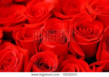 beautiful bouquet from the roses of pink and red color