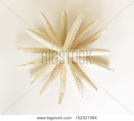 Starfishes stacked into an abstract styled background