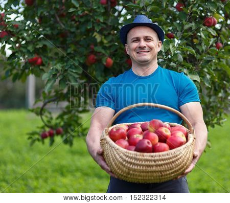 Farmer Picking Apples In A Basket