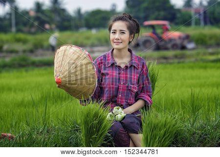 women farmers in rice fields ,woman worker.