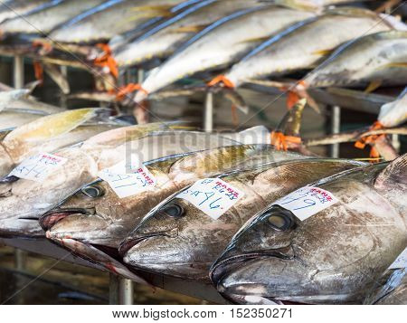 General Santos City - September 1 2016: Yellowfin tuna lined up for sale at the Tuna Harbor in General Santos City South Cotabato The Philippines. General Santos is the Tuna Capital of The Philippines and the tuna industry is an important contributor the