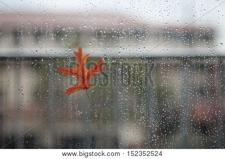 Autumn leaf stuck to wet the glass window with the rain drops
