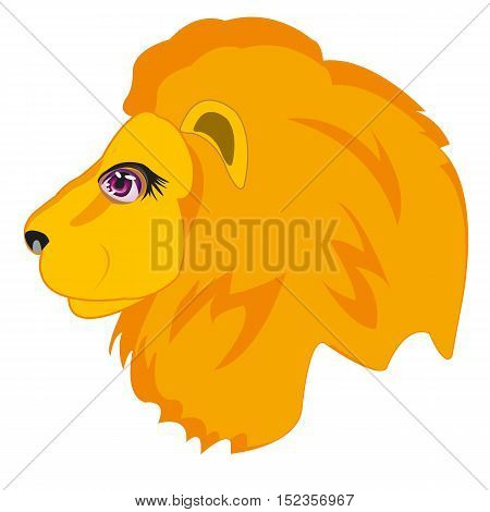 Head animal lion on white background is insulated