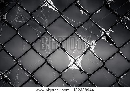 old metal grid in the web - black and white background