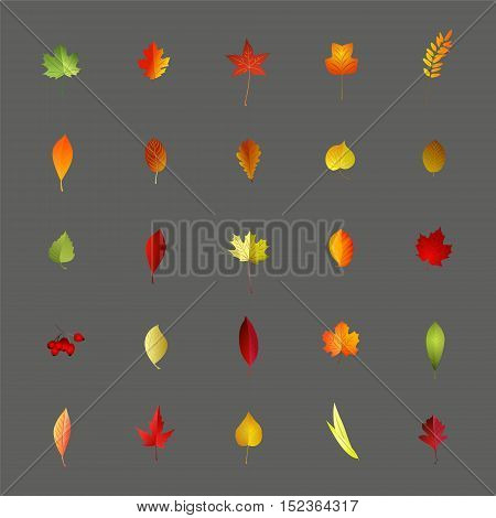 Collection of colorful autumnal leaves isolated on gray background.Vector illustration