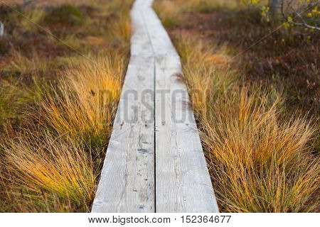 Closeup of a wooden boardwalk in an autumnal peatland with a shallow depth of field