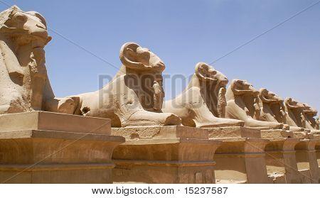 egypt ram