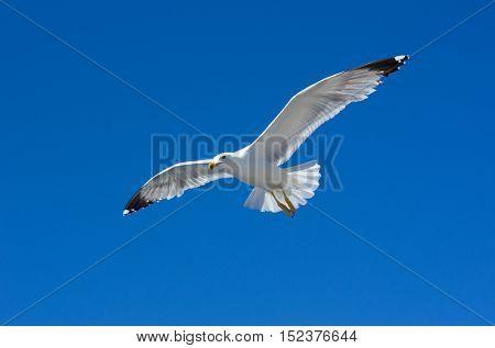 Sea gulls in sky