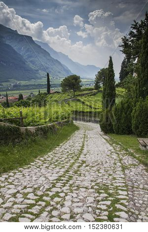 A beautiful road toward the vineyards in Italy.