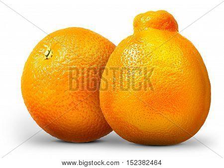 Group of oranges and mandarins isolated on white background.