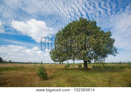 September beginning of autumn . Autumn landscape with grenn oak tree in the field. nature - in sunny . Picturesque view of in sunlight.