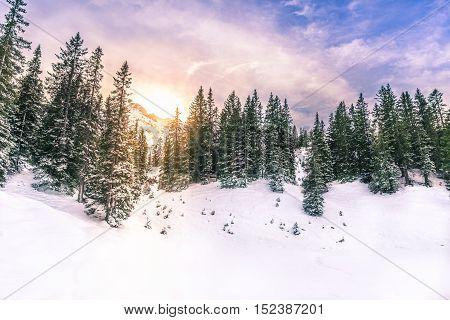Winter sun through fir forest  - Snowy landscape in the Austrian Alps with the sun shining through a fir forest and mountain peaks. Picture taken in Ehrwald Austria.