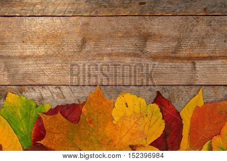 Autumn leaves on the background of wooden boards