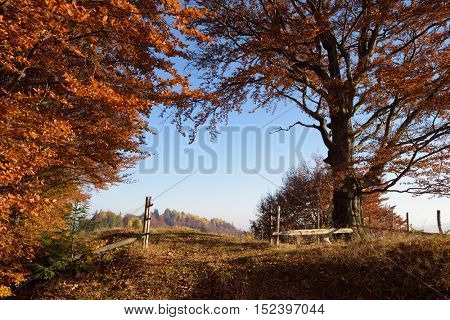 Autumn landscape in countryside. Wooden fence and gates. Road in beech forest. Sunny weather in the evening. Carpathian, Ukraine, Europe.