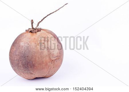 brown ripe coconut for fresh coconut milk  or coconut on white background healthy fruit food isolated