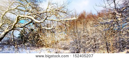 Frosty tree in the winter scenery . Winter landscape of frozen trees branch.