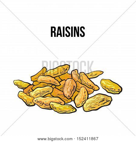 Pile of dried white raisins, sketch style vector illustration isolated on white background. Drawing of gold raisins, natural sweets, vegetarian snack