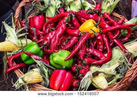 Chili pepper. Colorful mix of freshest and hottest chili peppers. Red Hot Chili Peppers in wooden basket with corn green and yellow peppers. Fresh vegetables. Healthy food. Mixed vegetables background