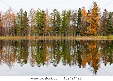 Autumn trees and their reflection in the water background