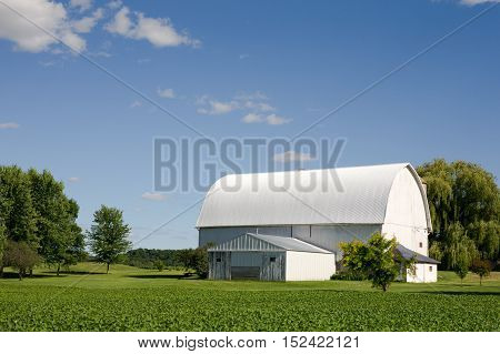 White barn surrounded by green crops and trees with copy space in the blue sky if needed.