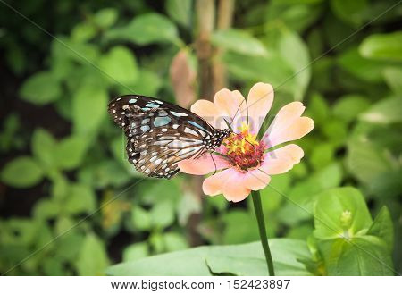 Beautiful butterfly on a flower, Bangkok, Thailand