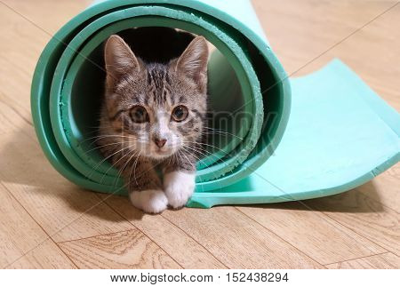 Kitten sitting on a yoga mat. The cat is on the mat for yoga fitness