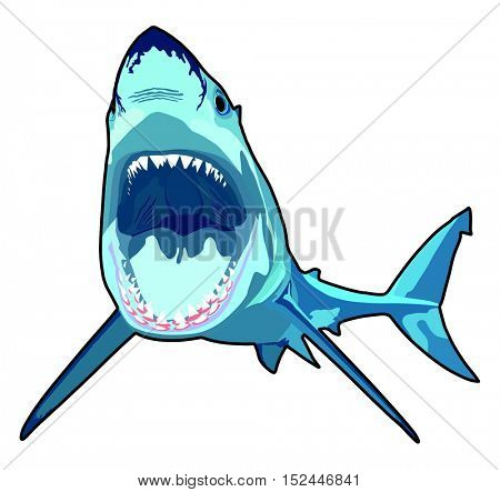 Vector - Shark with opened mouth in attack position and sharp teeth