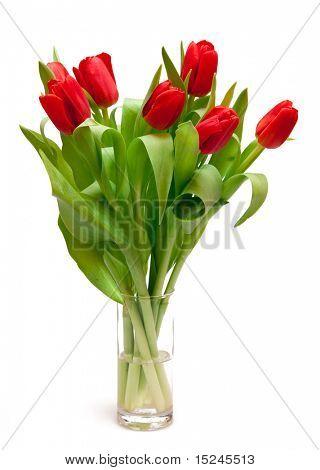 belas tulipas vermelhas em vaso