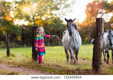 Little girl feeding a horse. Kid playing with pet horses. Child feeding animal on a ranch on cold fall day. Family on a farm in autumn. Outdoor fun for children.