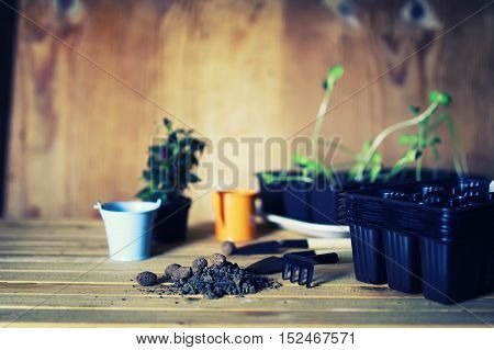preparations for the new summer season preparation plant seedlings and courting her