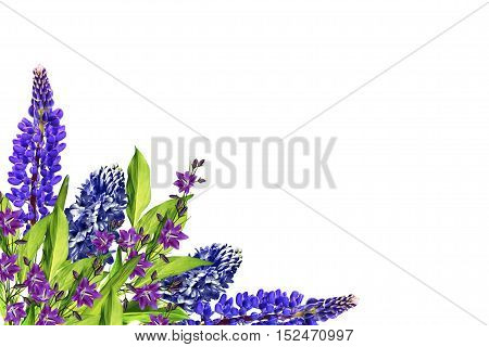 Blue lupines beautiful flowers on a white background