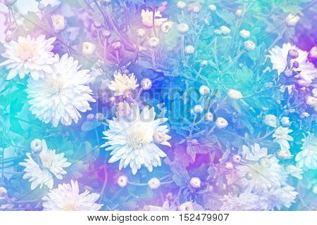 Colorful chrysanthemum flowers on a background of the autumn landscape