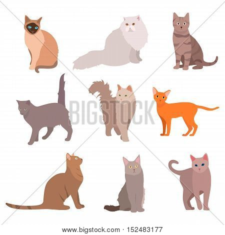 Cat big set. Beautiful cartoon cats isolated on white. Vector eps10