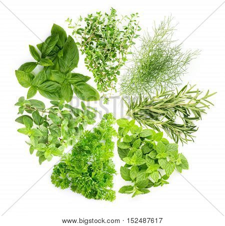 Concept : collection of herb is a plant used for flavoring or medicine. Alternative a variety and benefits alot of vitamin. It is inserted in every lifestyle. Presentation session on white background.
