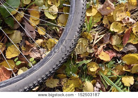 Part of a bicycle wheel which lies against the backdrop of fallen autumn leaves