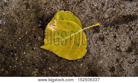 Yellow leaf on the asphalt, autumn, colors of autumn, fall, autumn pattern, autumn background, yellow leaves, autumn texture, fall back, autumn back, hello autumn