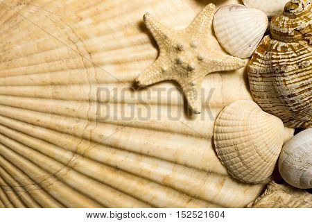background composition of different textured sea shells and starfish