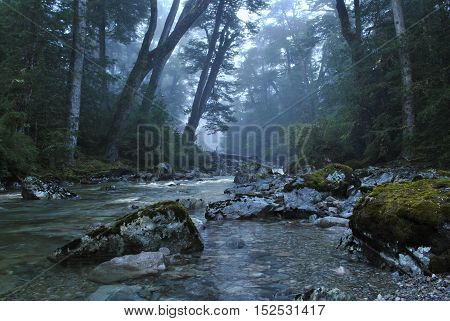 River running through misty, dense forest creating a magical atmosphere