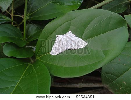 Close-up of little white butterfly on the green leaf