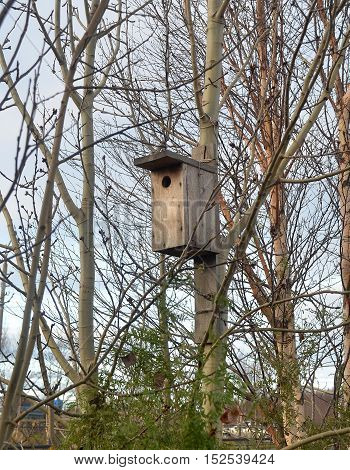 Reign birdhouse at sunset among bare, without leaves, branches of birch trees growing on city mall. Late autumn, migratory birds flew south