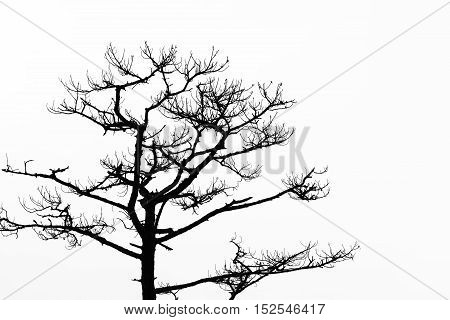 The tree without the leaf in black and white scene.