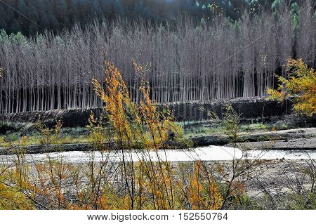Forest between the mountain and the river in Yeste Albacete Spain