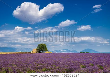 Summer in Valensole with lavender fields stone house and heart-shaped cloud. Summer in Alpes de Hautes Provence Southern French Alps France