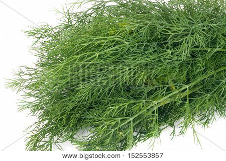 bunch of dill isolated on a white background closeup.