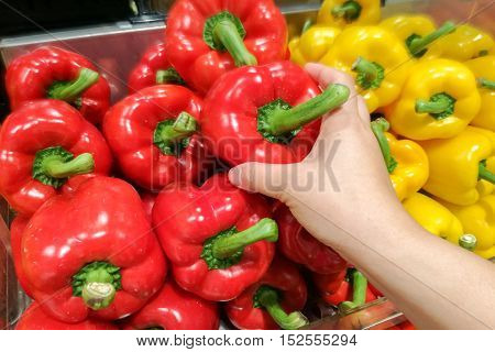 Housewife is shopping Ripe Yellow and Red Peppers in Vegetables Market.