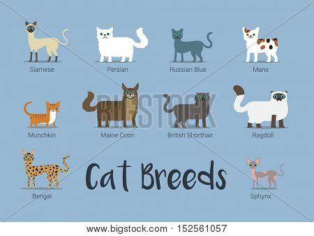 Set Of Cat Breeds Vector Illustration
